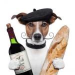 Fotolia_44831851_XS (2) Hund Baguette und Wein
